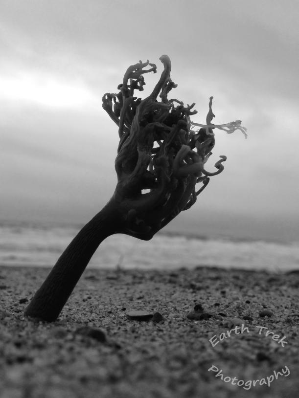 Dec seaweed